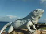 Giant iguana (not real)