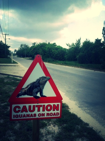 Caution! Baby Dinosaurs on the road