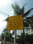 Turtle Nesting Beach in Fort Lauderdale